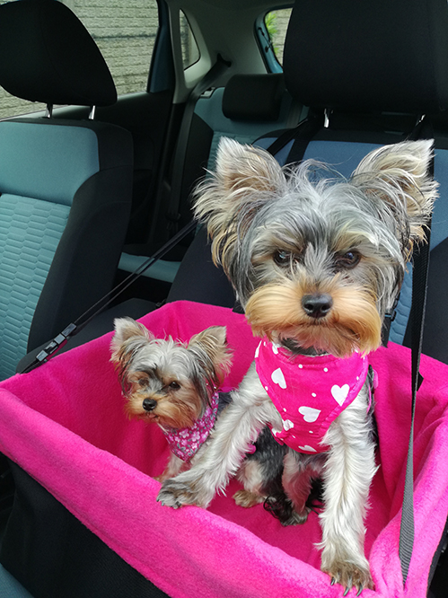 Chloe and Bella with their new harnesses and Booster. Photo courtesy M Swanepoel